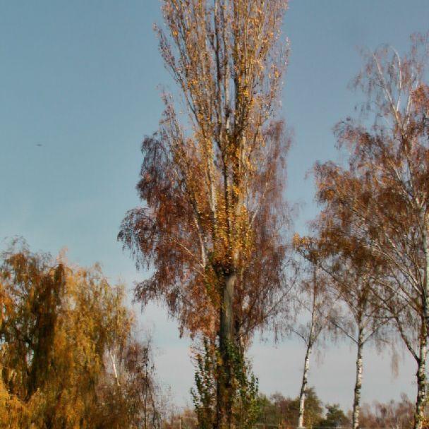 Jeseň v Ripňanoch - 2011